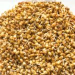 How to sprout moth bean lentils in the instant pot
