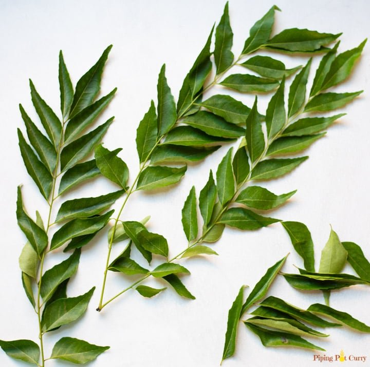Curry leaves with stem