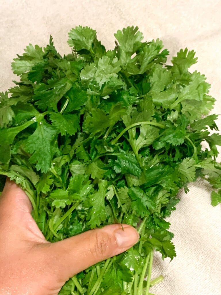 Removing water from cilantro bunch