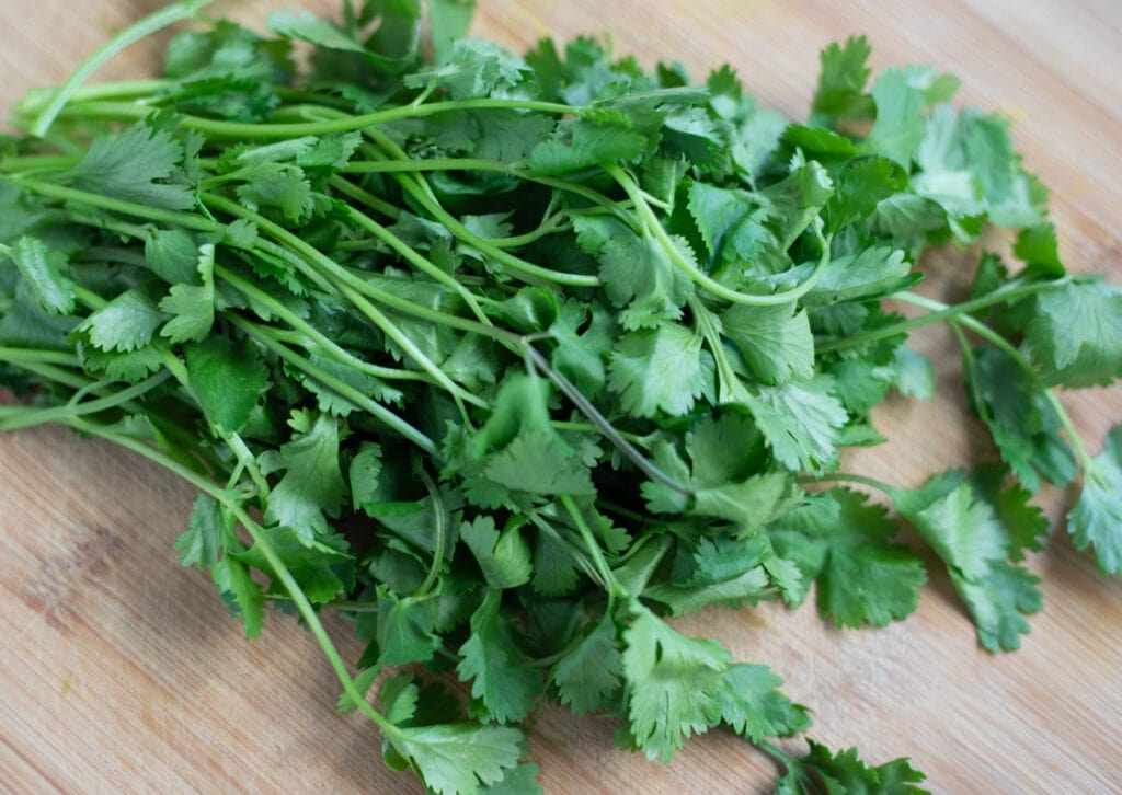 fresh cilantro bunch on a wooden cutting board