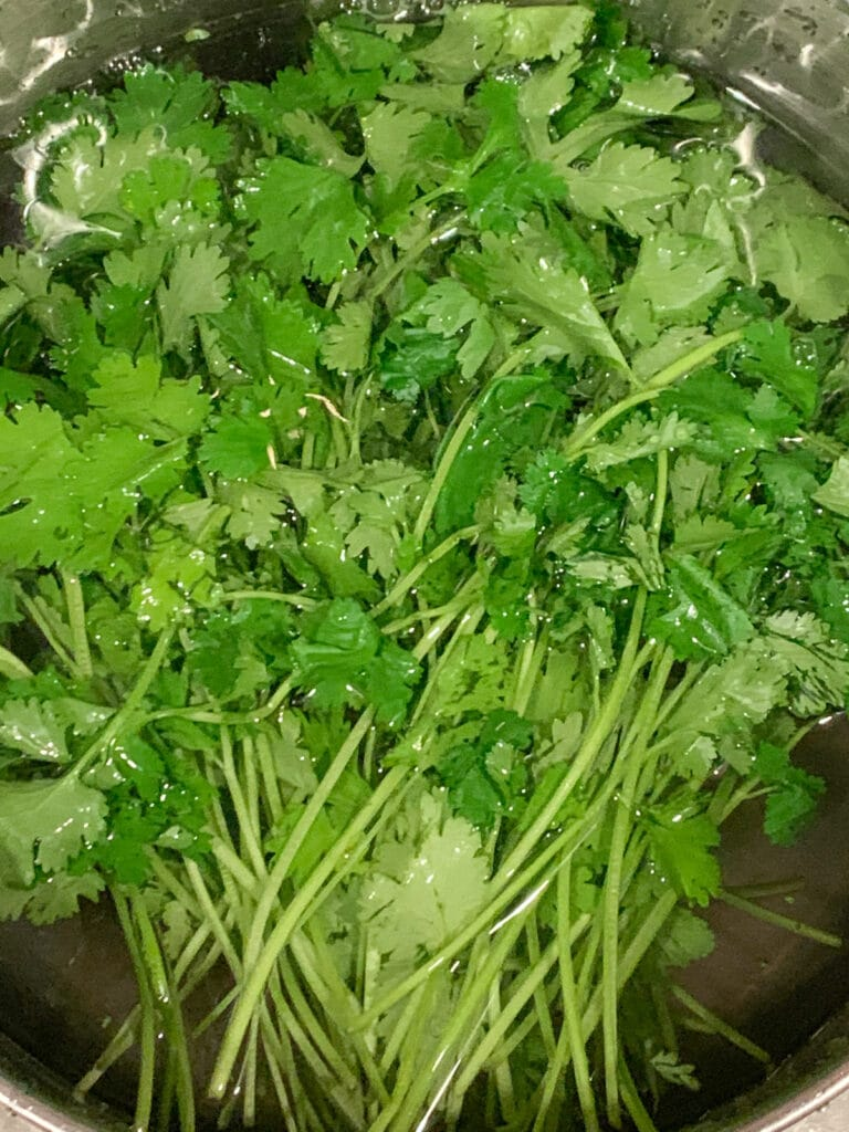 cilantro bunch being washed in a bowl of water
