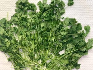 Cilantro spread on a kitchen towel to dry