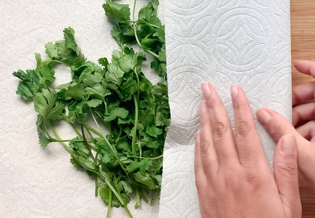 Storing cilantro wrapped in a paper towel