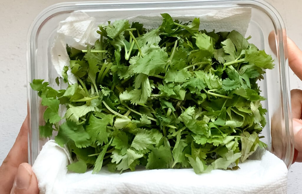 Chopped Cilantro that has been stored for a month in an air tight container lined with paper towel