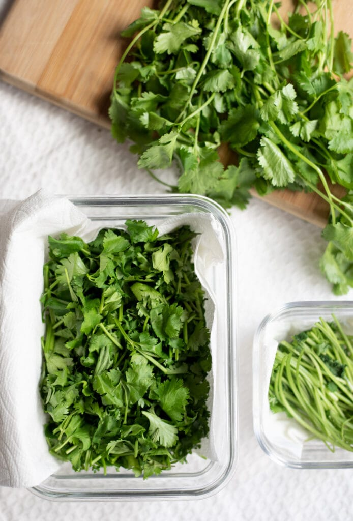 cilantro stems and leaves in separate containers lined with paper towels for storage